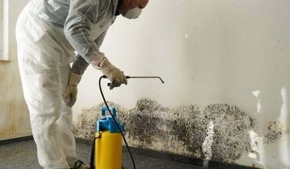 9 Signs of Mold At Home And Why You Should Not Ignore Them