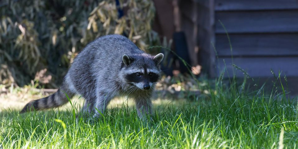 Advantages Of Hiring A Flying Squirrel Removal Service