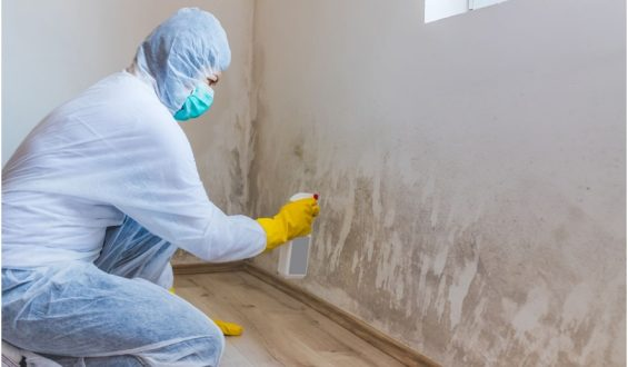 How to decide on the right mold removal company?