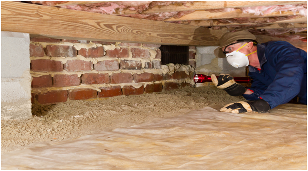 Pest Control: Things to Know About Termite Inspections